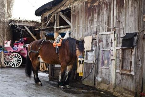 griffintown horse