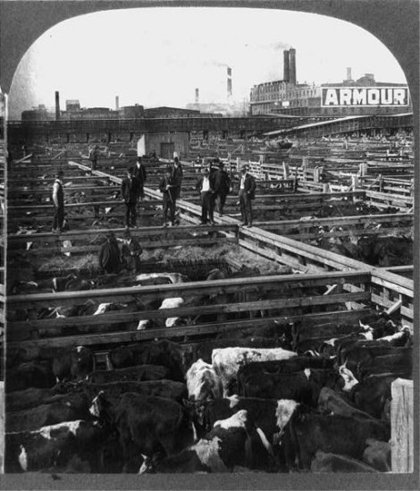 512px-Chicago_stockyards_cattle_pens_men_1909