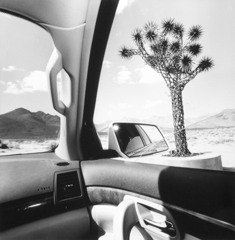 Picture of a sculpted cactus tree by Lee Friedlander from inside his car