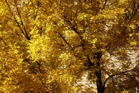 Leaves,yellow,photography, Image by Neath Turcot